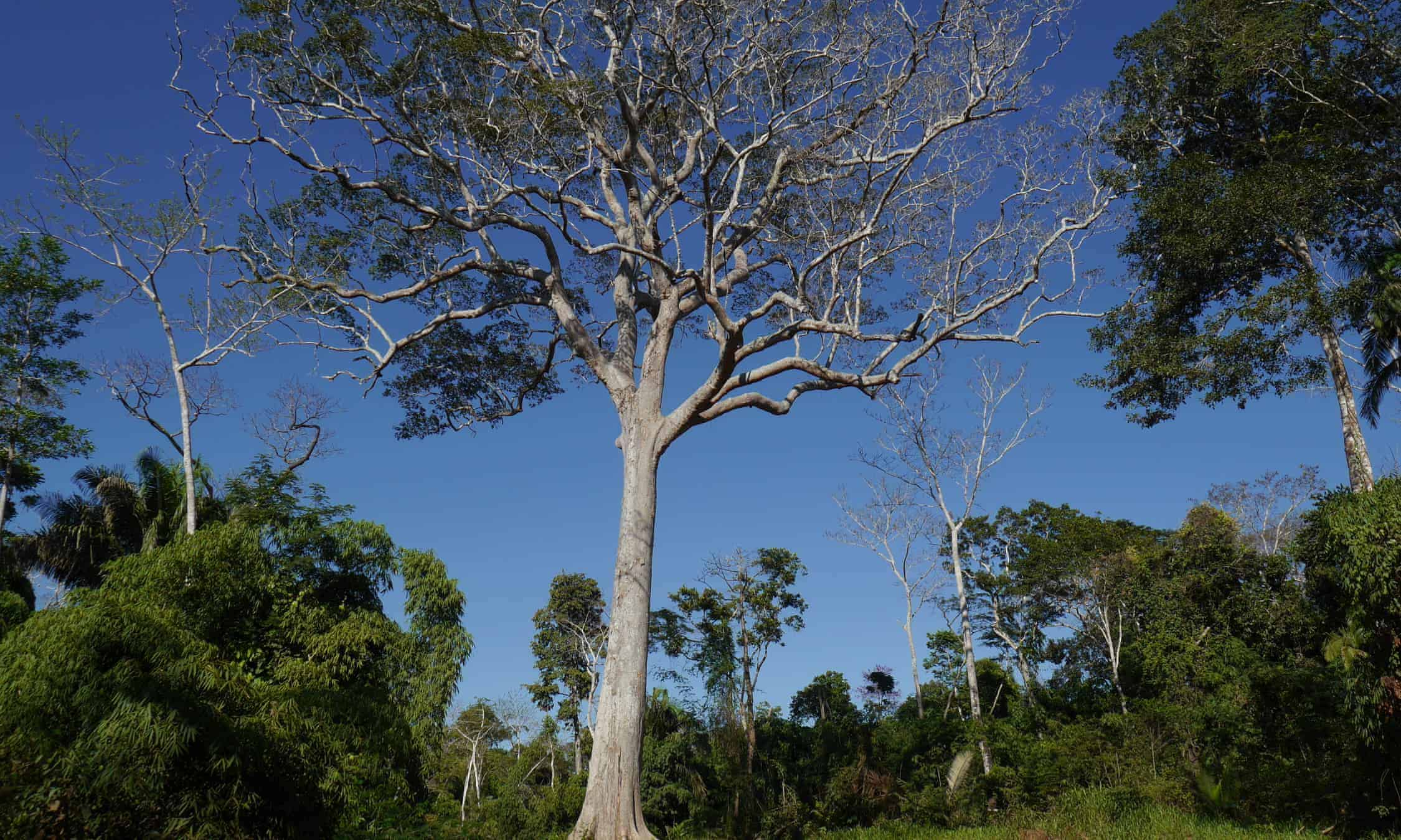 Reforesting the Amazon, a Live Interview with the BBC World Service