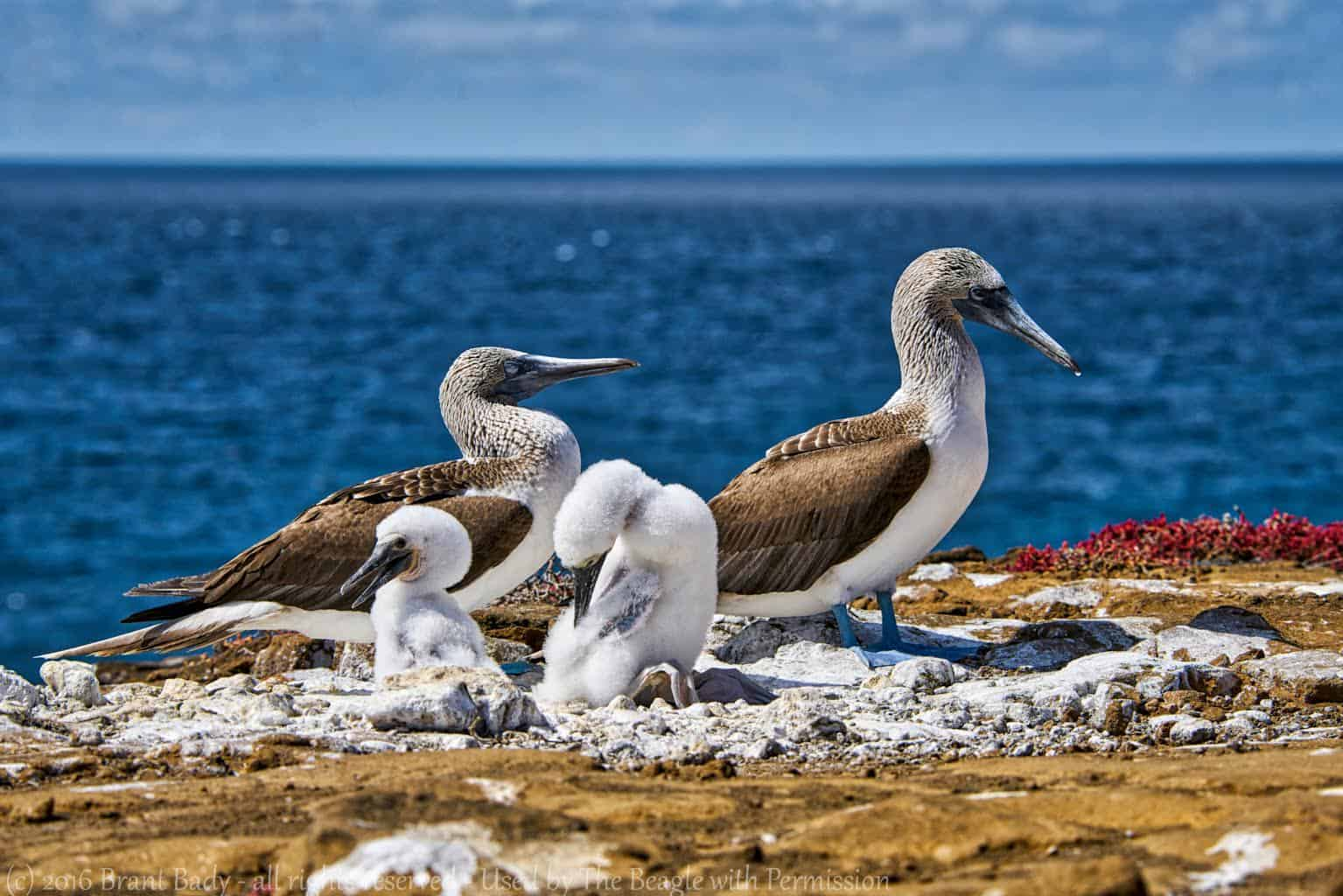 As the Climate Changes, So Will the Galápagos
